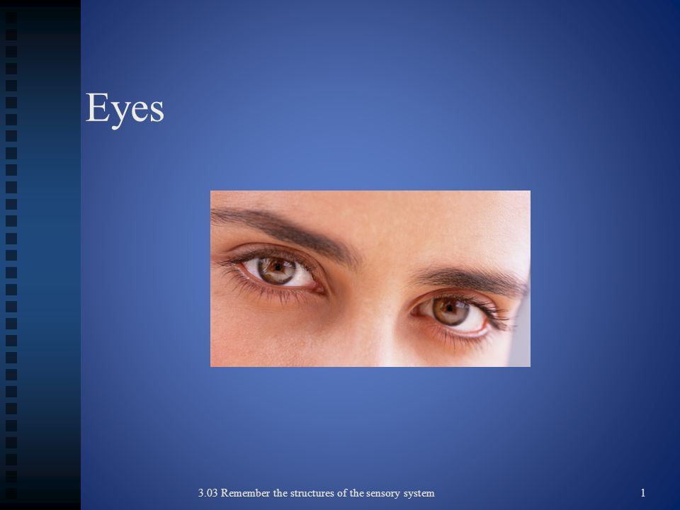 Eyes 3.03 Remember the structures of the sensory system1