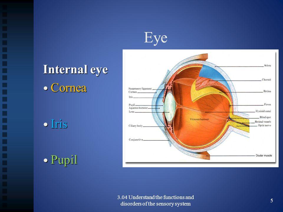 Eye Internal eye Cornea Cornea Iris Iris Pupil Pupil 3.04 Understand the functions and disorders of the sensory system 5
