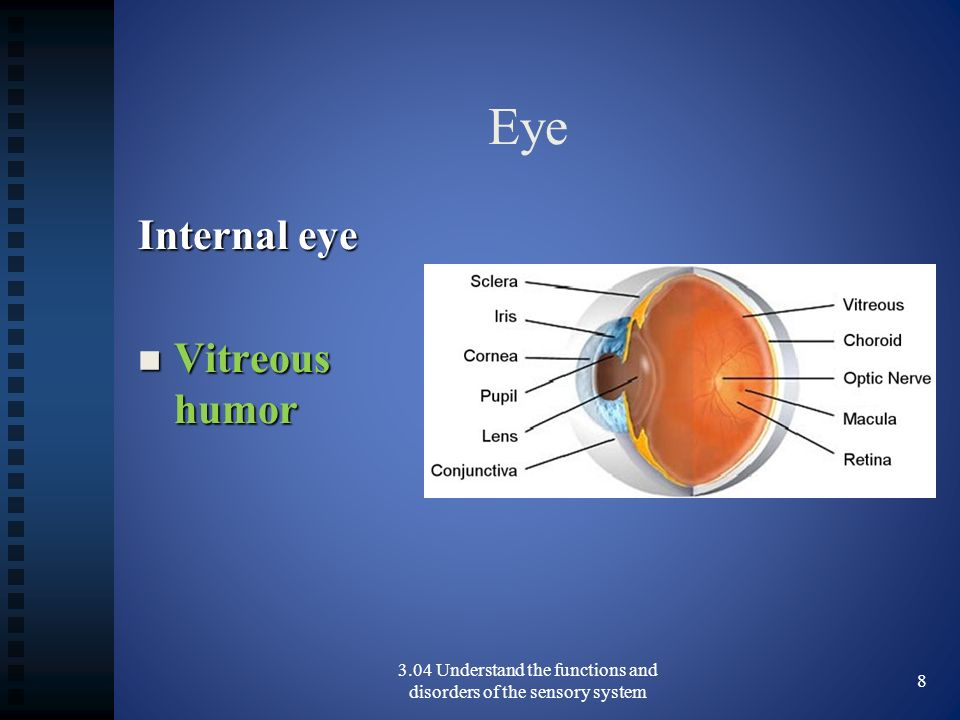 Eye Internal eye Vitreous humor Vitreous humor 3.04 Understand the functions and disorders of the sensory system 8