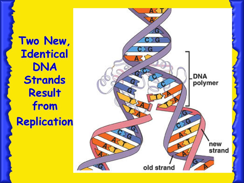 13 Translation mRNA protein