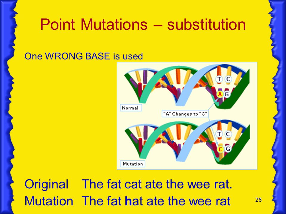 26 Point Mutations – substitution One WRONG BASE is used OriginalThe fat cat ate the wee rat. MutationThe fat hat ate the wee rat
