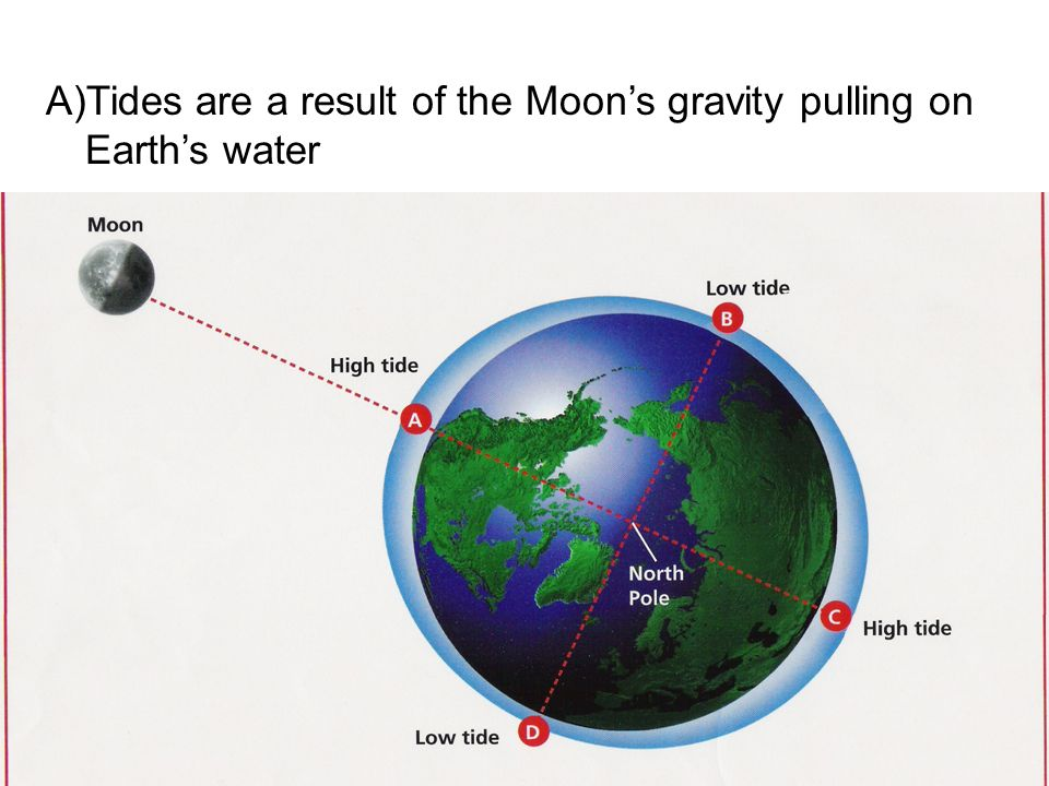 A)Tides are a result of the Moons gravity pulling on Earths water