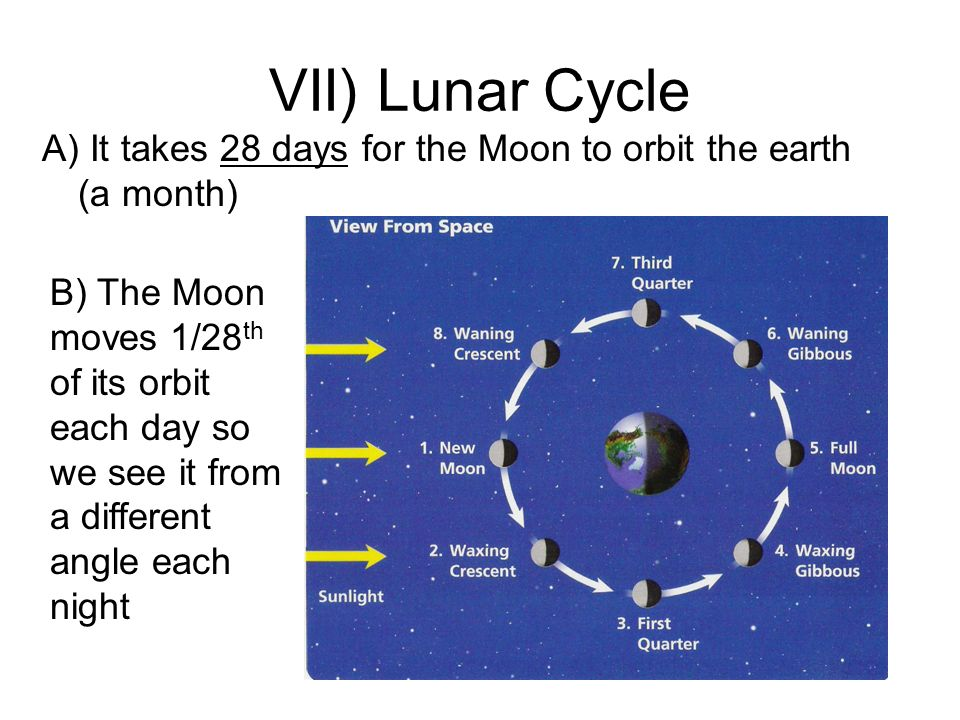 VII) Lunar Cycle A) It takes 28 days for the Moon to orbit the earth (a month) B) The Moon moves 1/28 th of its orbit each day so we see it from a dif