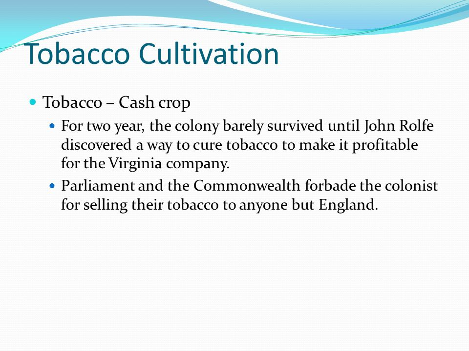 Tobacco Cultivation Tobacco – Cash crop For two year, the colony barely survived until John Rolfe discovered a way to cure tobacco to make it profitab