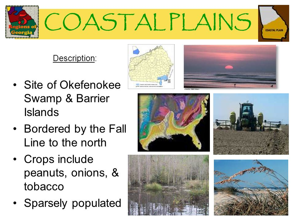 COASTAL PLAINS Description: Site of Okefenokee Swamp & Barrier Islands Bordered by the Fall Line to the north Crops include peanuts, onions, & tobacco