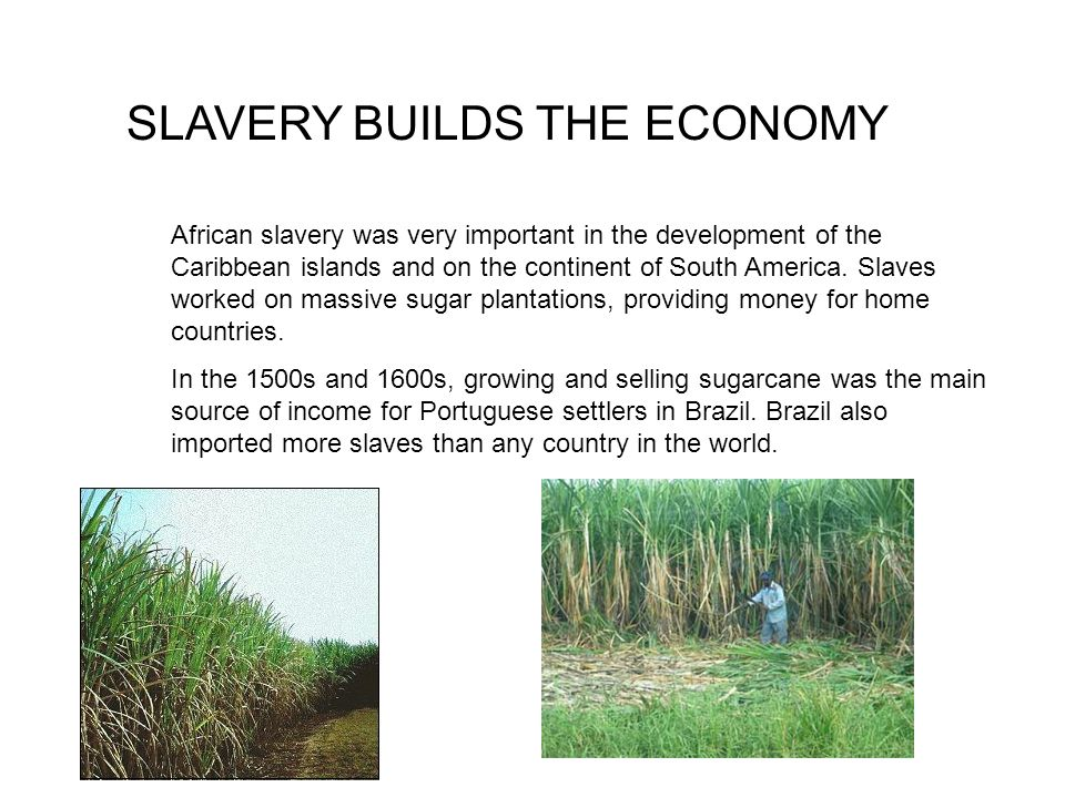 SLAVERY BUILDS THE ECONOMY African slavery was very important in the development of the Caribbean islands and on the continent of South America. Slave