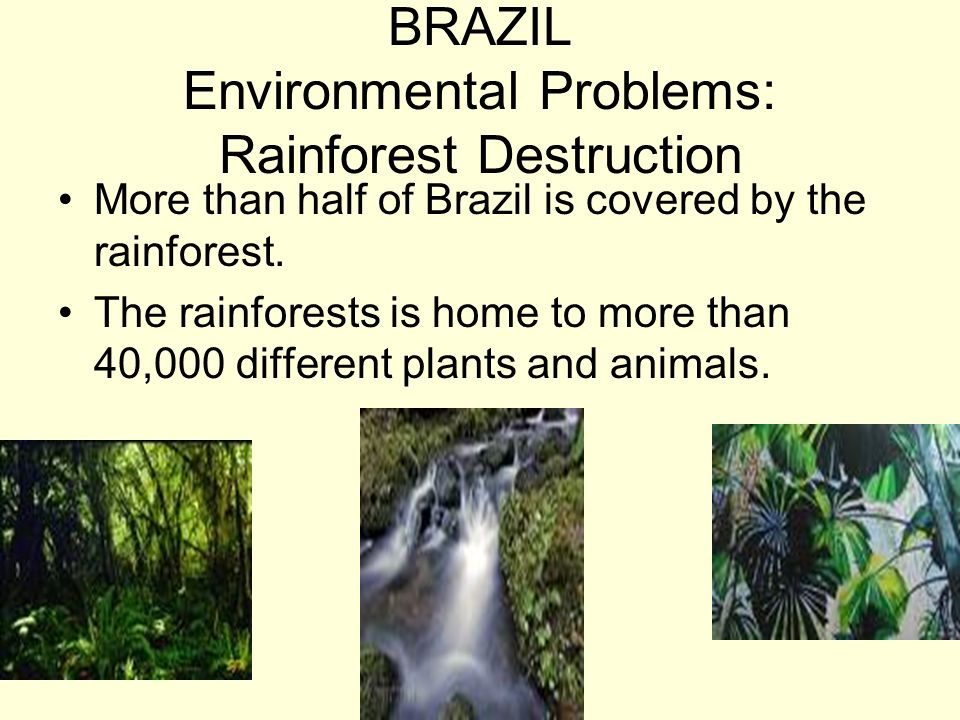 BRAZIL Environmental Problems: Rainforest Destruction More than half of Brazil is covered by the rainforest. The rainforests is home to more than 40,0