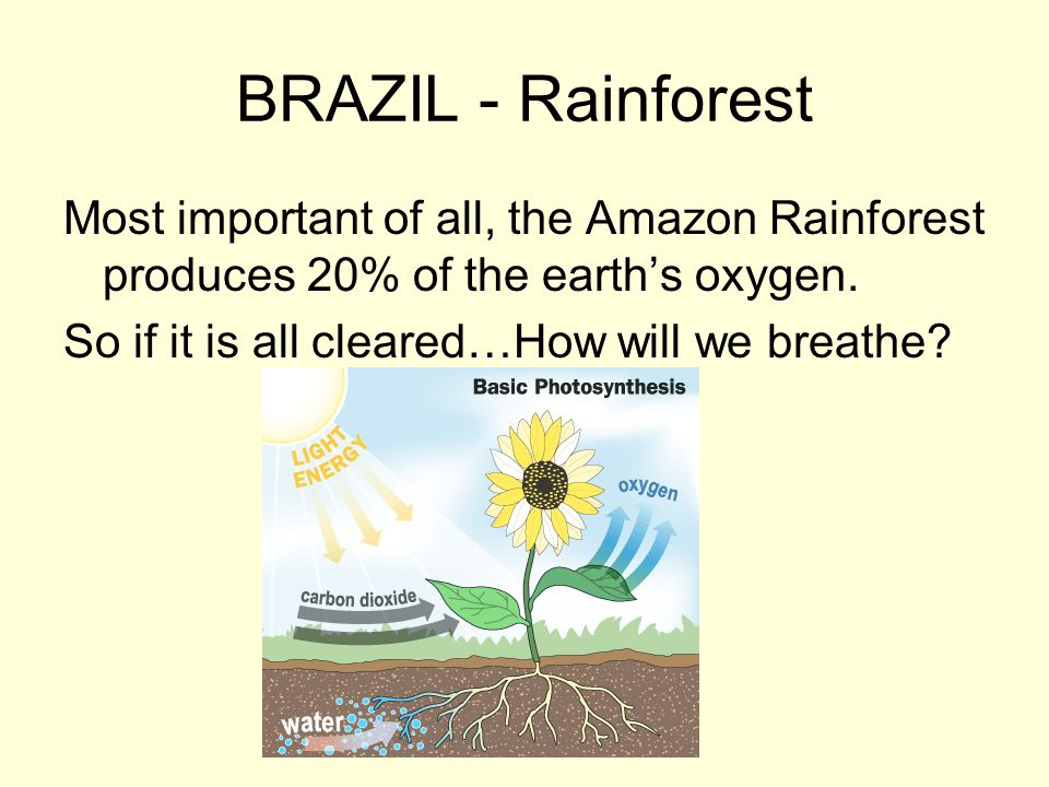 BRAZIL - Rainforest Most important of all, the Amazon Rainforest produces 20% of the earths oxygen. So if it is all cleared…How will we breathe?