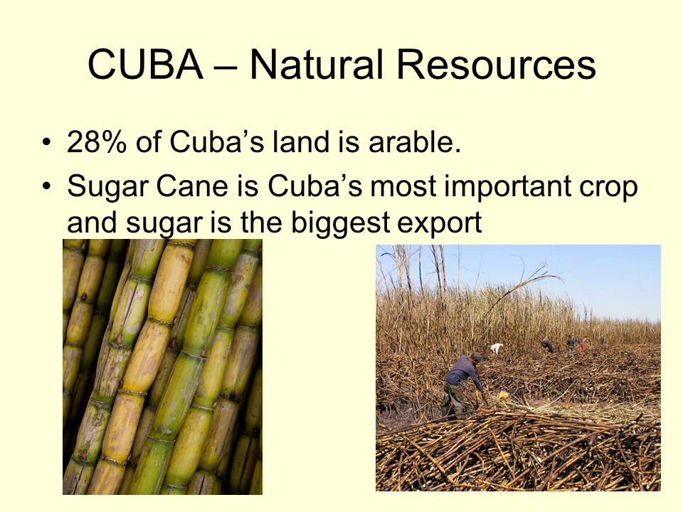 CUBA – Natural Resources 28% of Cubas land is arable. Sugar Cane is Cubas most important crop and sugar is the biggest export