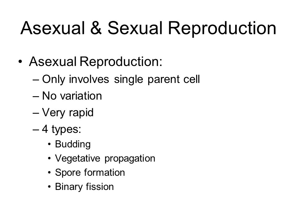 Sexual Reproduction Female gamete – egg (ovum) Male gamete – sperm (spermatozoan) Fertilization = joining of sperm and egg Fertilized egg called zygote (then embryo, then fetus) Know these terms for plants: –Pollen, stamen, pistil, seed, ovary, fruit, germination