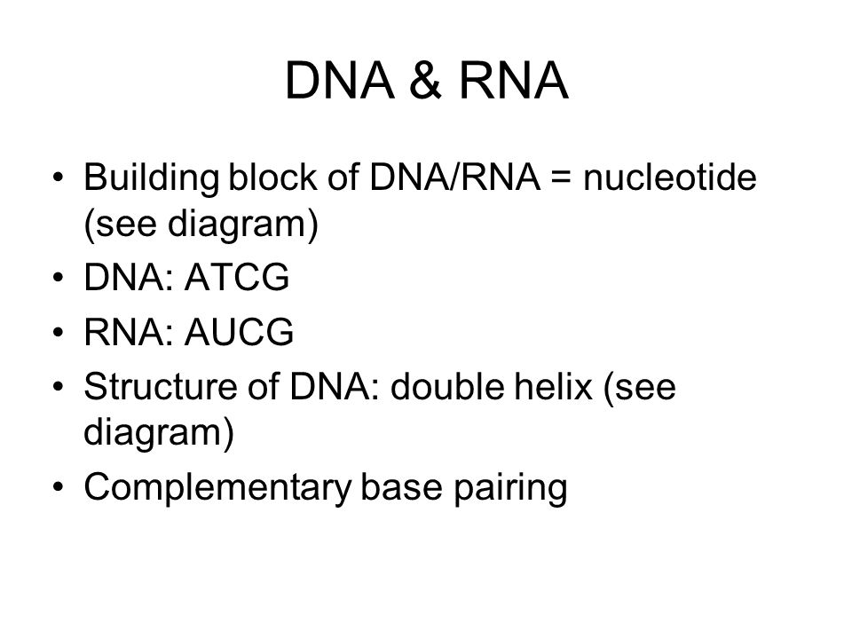 DNA & RNA Building block of DNA/RNA = nucleotide (see diagram) DNA: ATCG RNA: AUCG Structure of DNA: double helix (see diagram) Complementary base pai