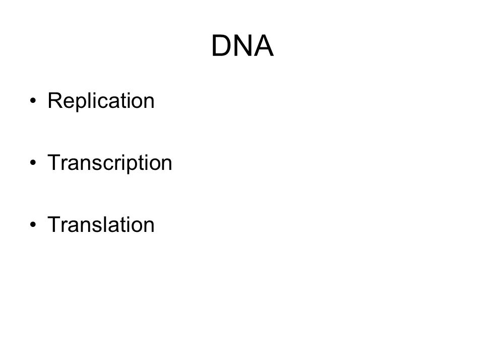 DNA Replication Transcription Translation