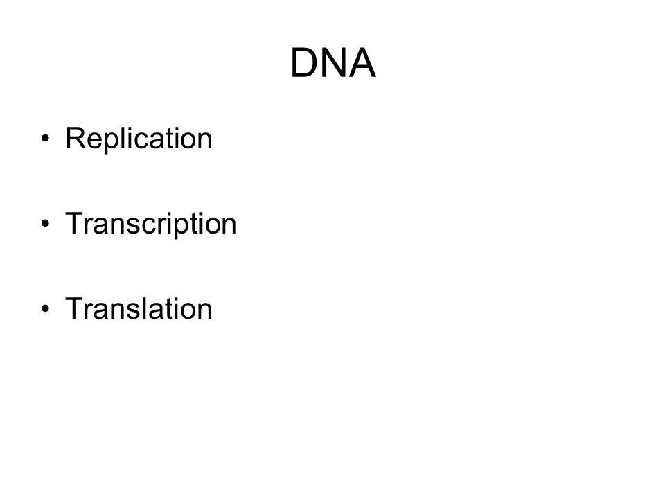 Mitosis Interphase Mitosis –Prophase –Metaphase –Anaphase –Telophase