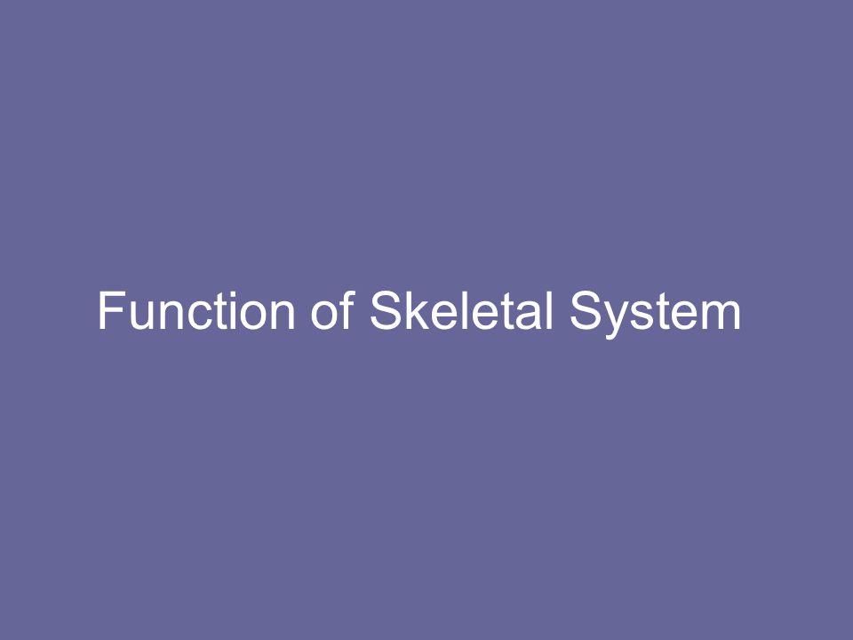 Function of Skeletal System