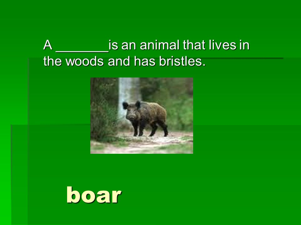A _______is an animal that lives in the woods and has bristles. boar