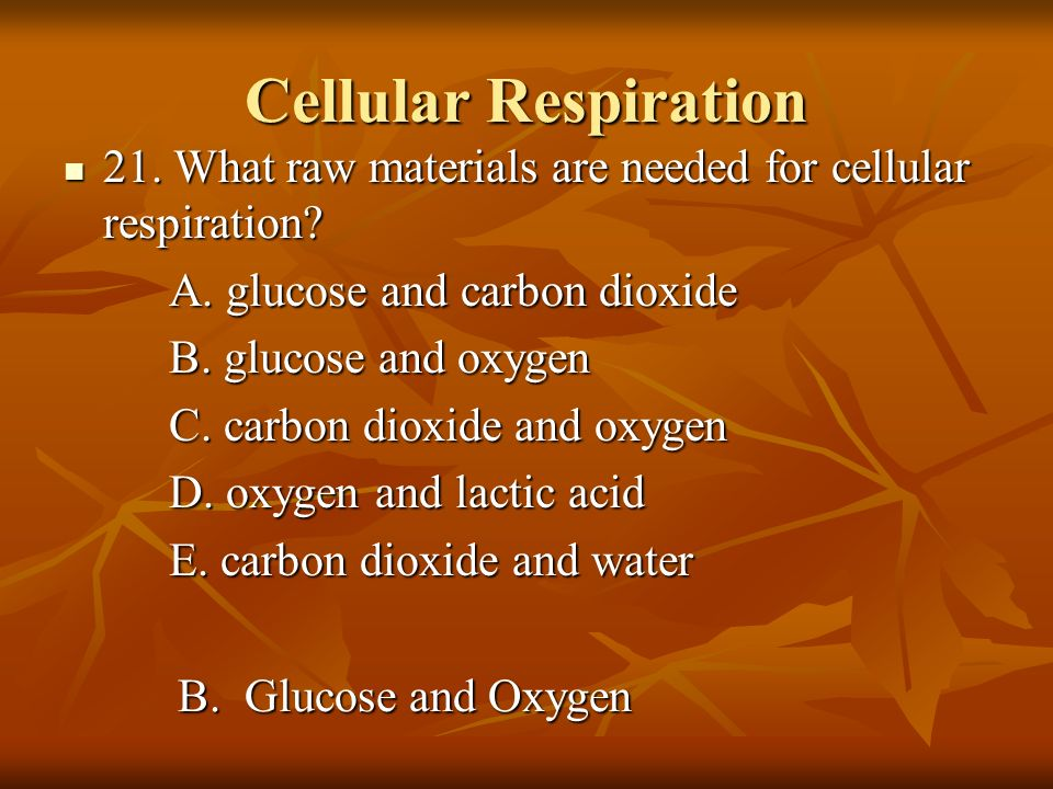 Cellular Respiration 21. What raw materials are needed for cellular respiration? 21. What raw materials are needed for cellular respiration? A. glucos