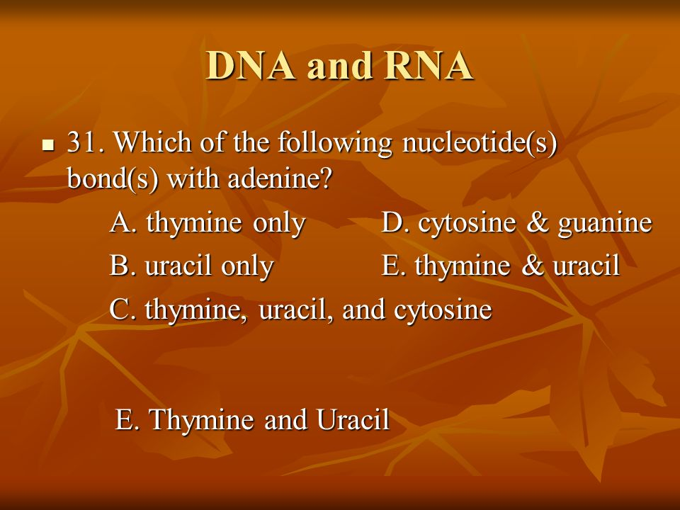 DNA and RNA 31. Which of the following nucleotide(s) bond(s) with adenine? 31. Which of the following nucleotide(s) bond(s) with adenine? A. thymine o