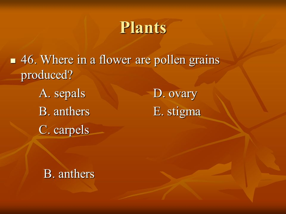Plants 46. Where in a flower are pollen grains produced? 46. Where in a flower are pollen grains produced? A. sepalsD. ovary B. anthersE. stigma C. ca