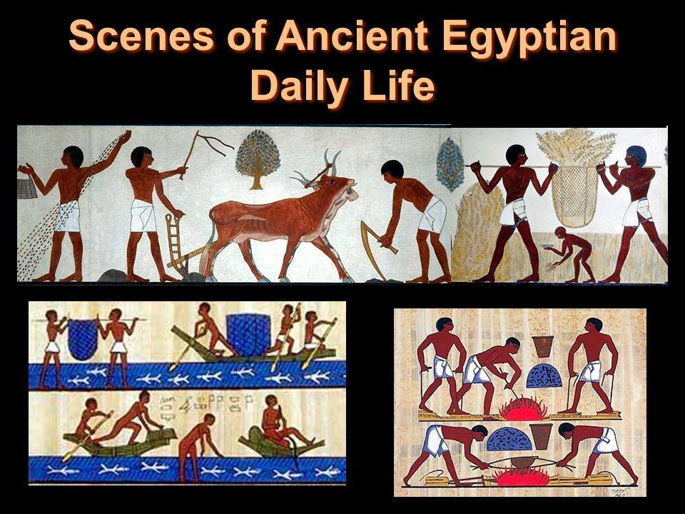 Scenes of Ancient Egyptian Daily Life