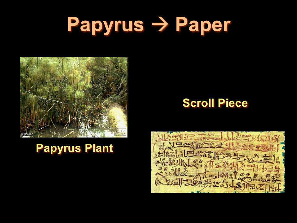 Papyrus Paper Papyrus Plant Scroll Piece