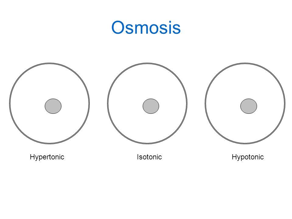 HypertonicIsotonicHypotonic Osmosis