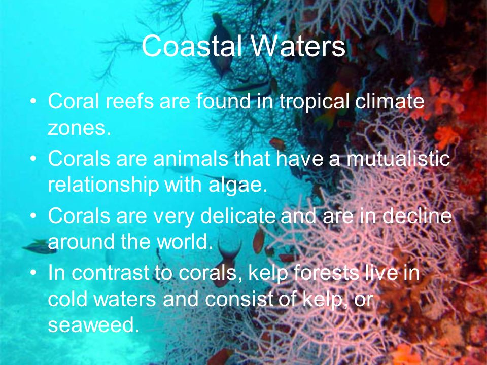 Coastal Waters Coral reefs are found in tropical climate zones. Corals are animals that have a mutualistic relationship with algae. Corals are very de