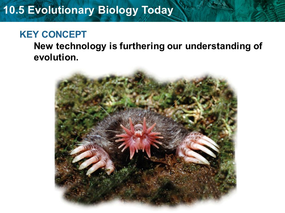 10.5 Evolutionary Biology Today KEY CONCEPT New technology is furthering our understanding of evolution.