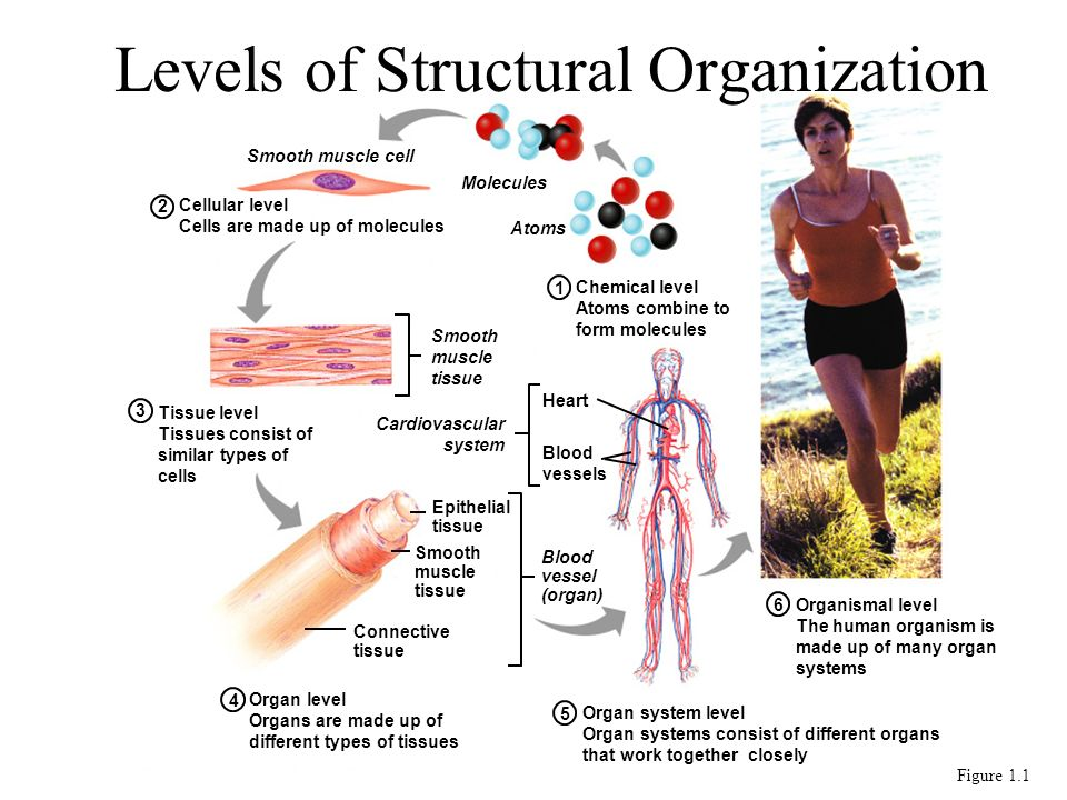 Homeostatic Imbalance Disturbance of homeostasis or the bodys normal equilibrium Overwhelming of negative feedback mechanisms allowing destructive positive feedback mechanisms to take over