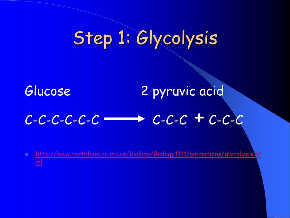 Step 1: Glycolysis Glucose2 pyruvic acid C-C-C-C-C-C C-C-C + C-C-C http://www.northland.cc.mn.us/biology/Biology1111/animations/glycolysis.ht ml http: