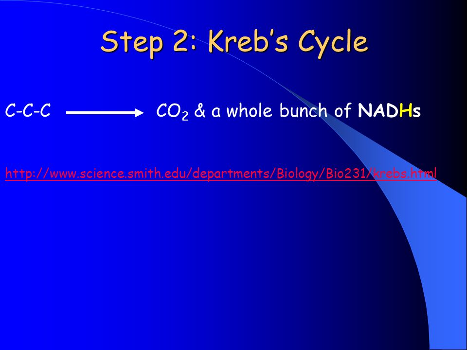 Step 2: Krebs Cycle C-C-C CO 2 & a whole bunch of NADHs http://www.science.smith.edu/departments/Biology/Bio231/krebs.html
