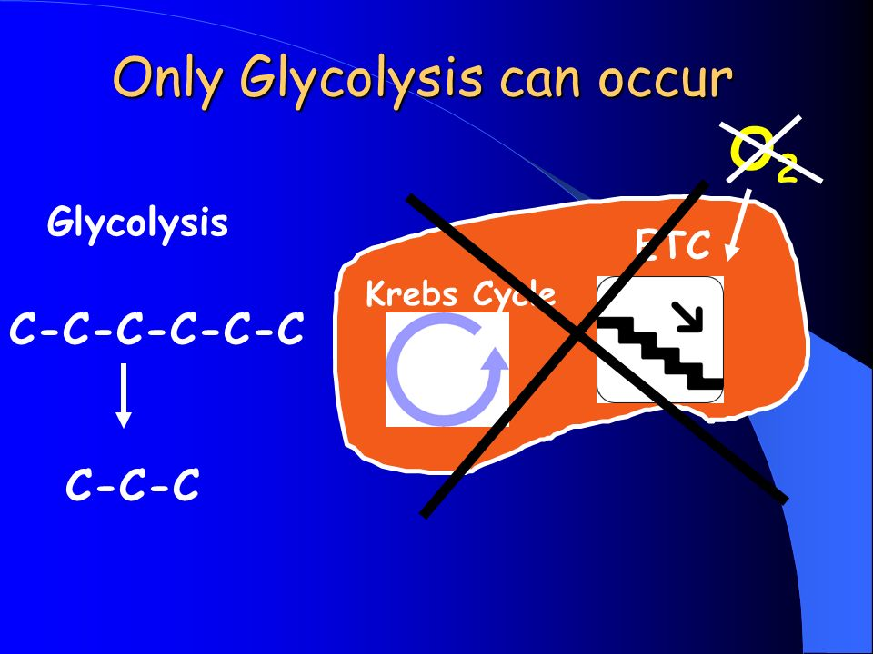Glycolysis C-C-C-C-C-C C-C-C Krebs Cycle ETC Only Glycolysis can occur O2O2