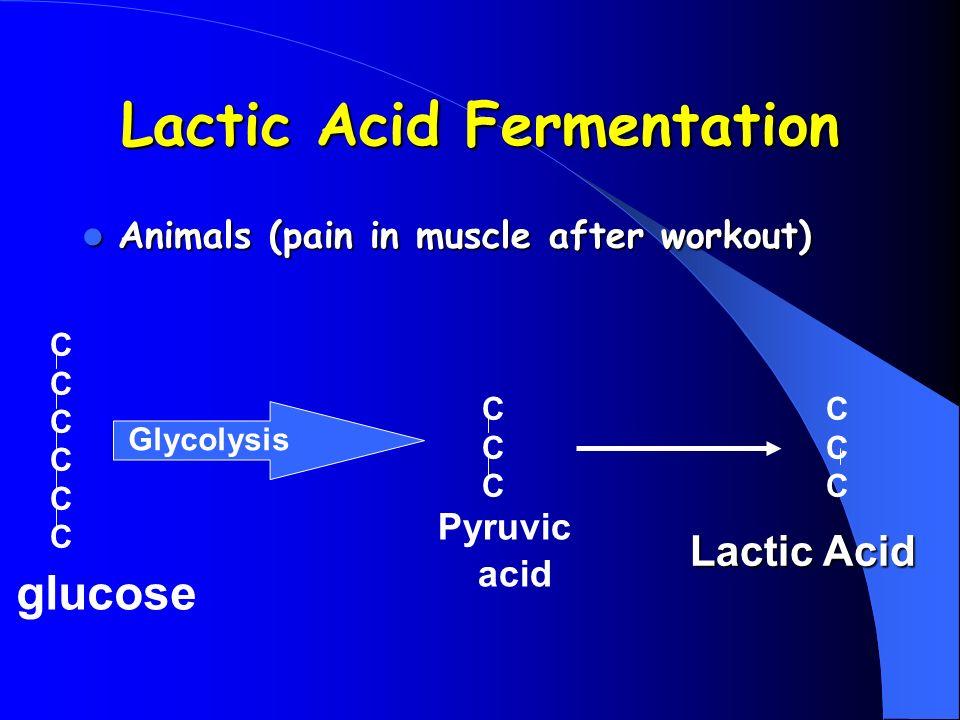 Lactic Acid Fermentation Animals (pain in muscle after workout) Animals (pain in muscle after workout) glucose Glycolysis CCCCCCCCCCCCC CCCCCC Pyruvic