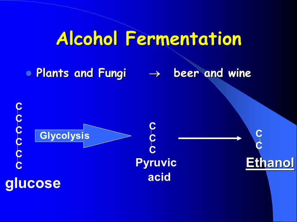 Alcohol Fermentation Plants and Fungi beer and wine Plants and Fungi beer and wine glucose Glycolysis CCCCCCCCCCCCC CCCCCC Pyruvic acid CCCC Ethanol