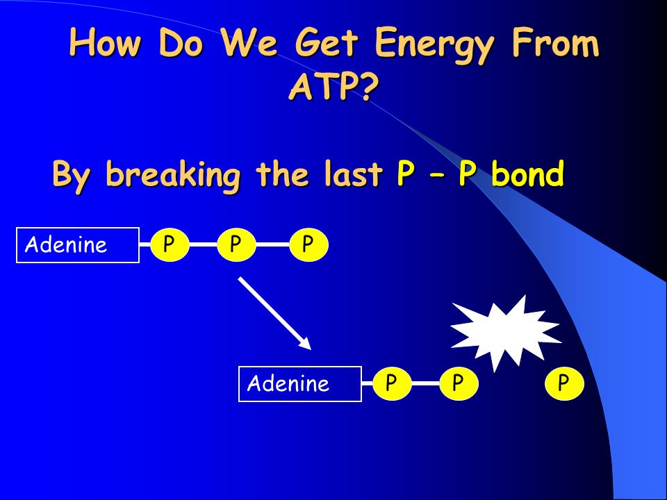 How Do We Get Energy From ATP By breaking the last P – P bond P Adenine PP PP P