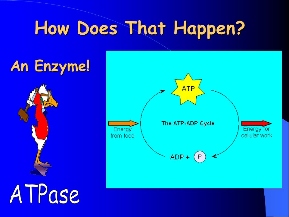 How Does That Happen An Enzyme!