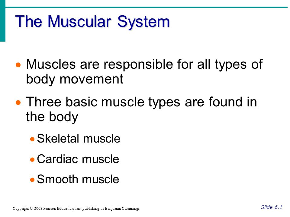 The Muscular System Slide 6.1 Copyright © 2003 Pearson Education, Inc. publishing as Benjamin Cummings Muscles are responsible for all types of body m