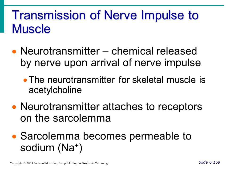 Transmission of Nerve Impulse to Muscle Slide 6.16a Copyright © 2003 Pearson Education, Inc. publishing as Benjamin Cummings Neurotransmitter – chemic