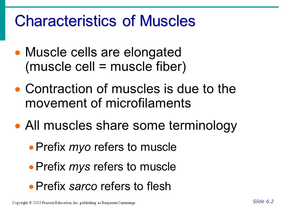 Characteristics of Muscles Slide 6.2 Copyright © 2003 Pearson Education, Inc. publishing as Benjamin Cummings Muscle cells are elongated (muscle cell