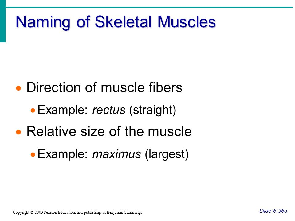 Naming of Skeletal Muscles Slide 6.36a Copyright © 2003 Pearson Education, Inc. publishing as Benjamin Cummings Direction of muscle fibers Example: re