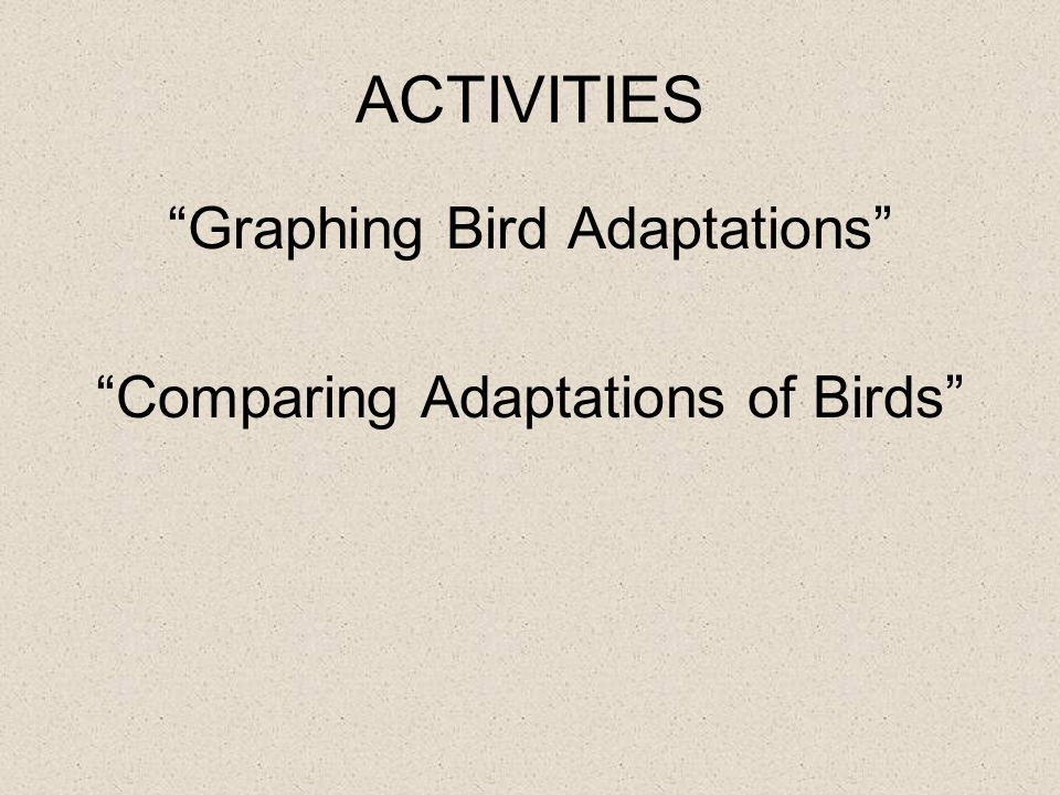 ACTIVITIES Graphing Bird Adaptations Comparing Adaptations of Birds