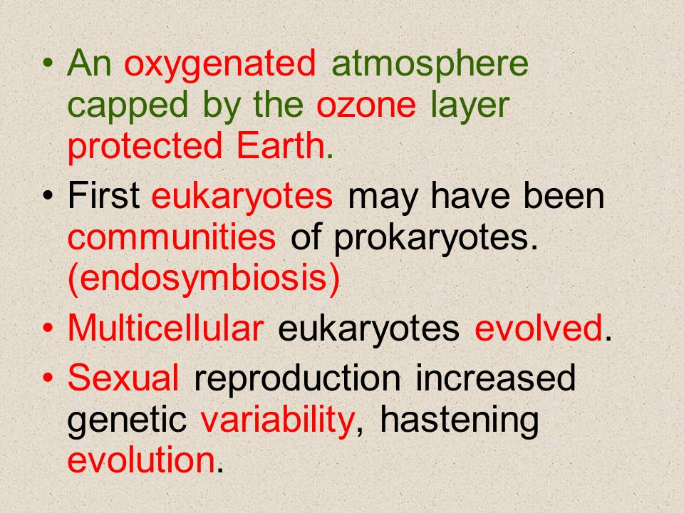 An oxygenated atmosphere capped by the ozone layer protected Earth. First eukaryotes may have been communities of prokaryotes. (endosymbiosis) Multice