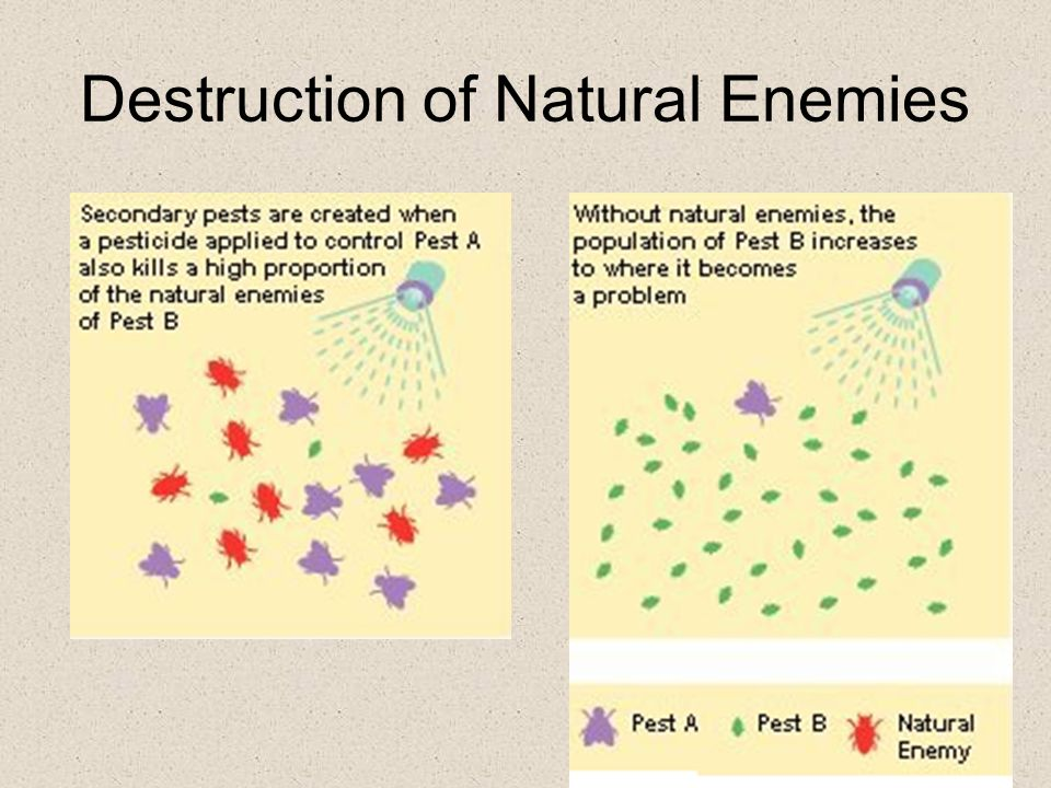 Destruction of Natural Enemies
