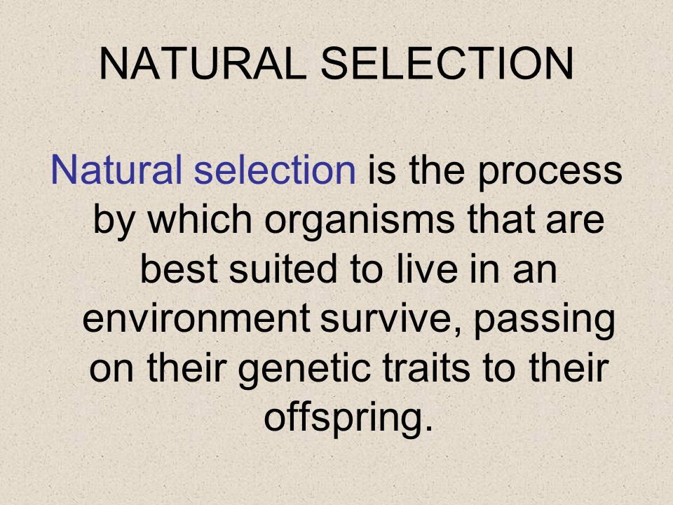 NATURAL SELECTION Natural selection is the process by which organisms that are best suited to live in an environment survive, passing on their genetic