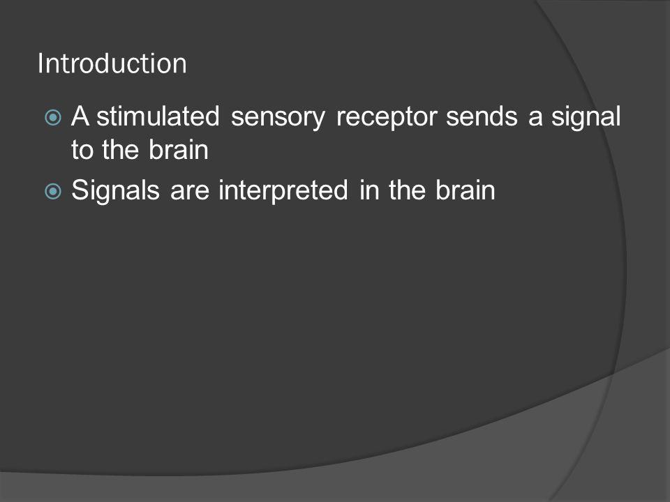 Introduction A stimulated sensory receptor sends a signal to the brain Signals are interpreted in the brain