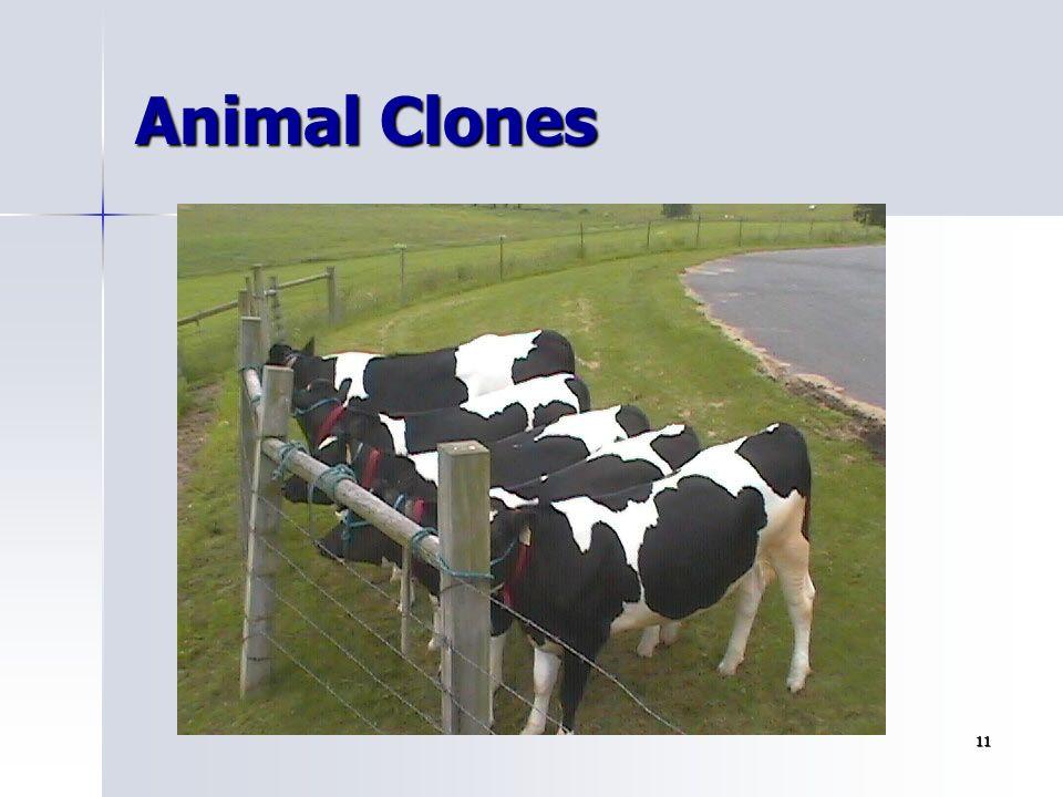 11 Animal Clones