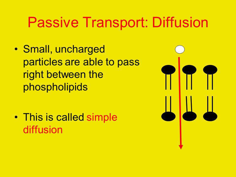 Passive Transport: Diffusion Small, uncharged particles are able to pass right between the phospholipids This is called simple diffusion