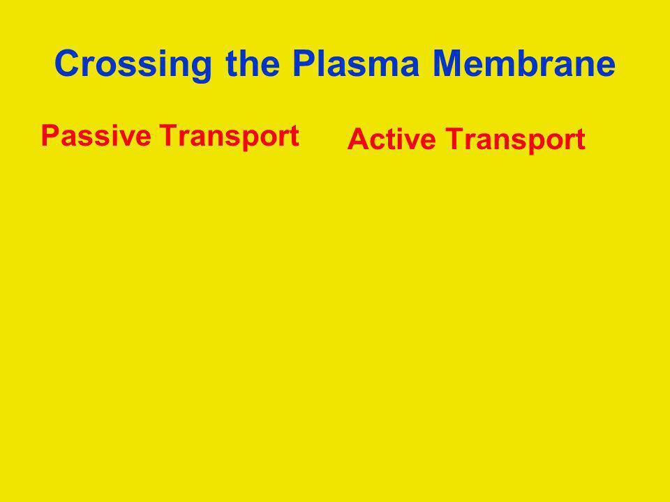 Crossing the Plasma Membrane Passive Transport Active Transport