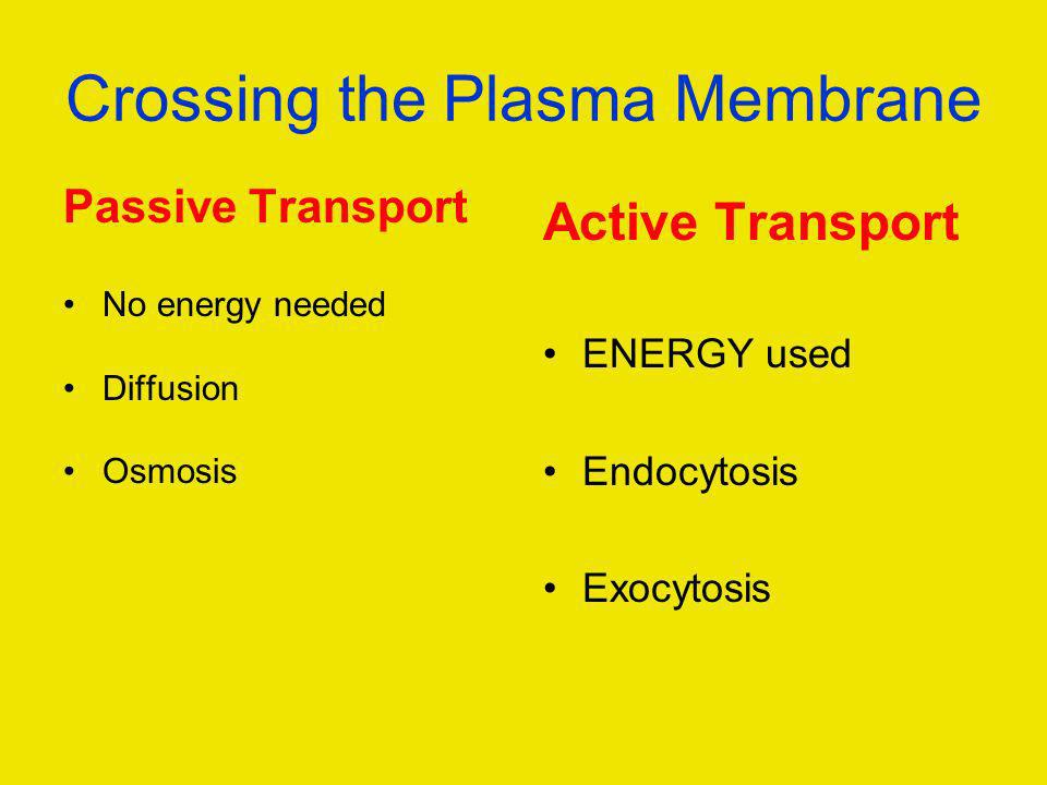 Crossing the Plasma Membrane Passive Transport No energy needed Diffusion Osmosis Active Transport ENERGY used Endocytosis Exocytosis