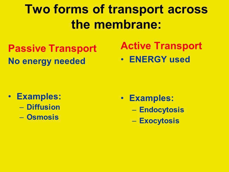 Two forms of transport across the membrane: Passive Transport No energy needed Examples: –Diffusion –Osmosis Active Transport ENERGY used Examples: –E