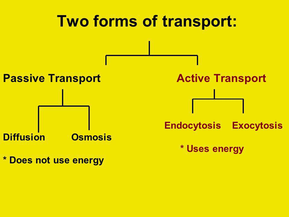 Two forms of transport: Passive Transport Diffusion Osmosis * Does not use energy Active Transport Endocytosis Exocytosis * Uses energy